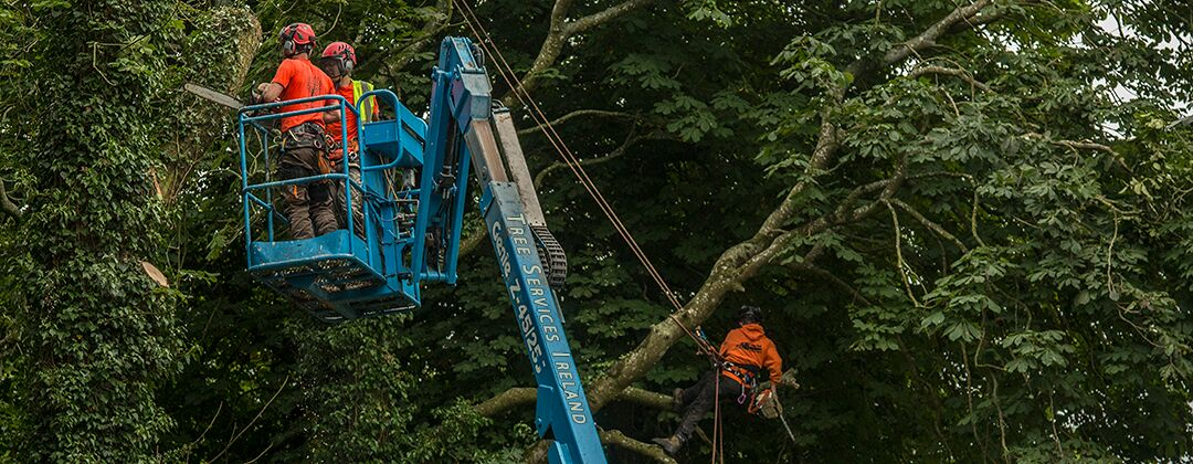 Emergency Tree Removal | Tree Surgeons